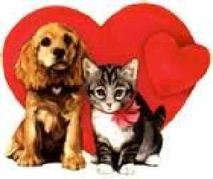 Animal Friends - Rays of Wisdom - Mourning for beloved Animal Friends - Comfort for the Bereaved