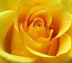 Rays Of Wisdom - Comfort For The Bereaved - The Rose
