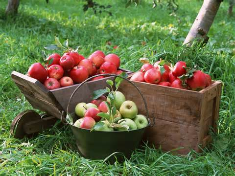 Rays of Wisdom - Healers And Healing - The Apples Of My Tree