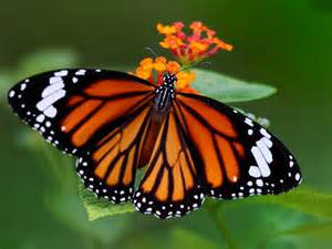 Rays of Wisdom - Astrology Of A Lifehelp In Relationship Healing - The Tale Of The Butterfly