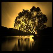 Rays of Wisdom - War And Peace In Relationships - Good Relationships Don't Grow On Trees