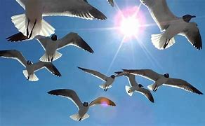 Rays Of Wisdom - Relationship Healing - Guidance From The Universe - The Seagull's Message