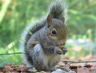 The Squirrel's Tale - Rays of  Wisdom - Relationship Healing - Guidance From The Universe