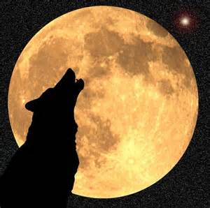 Rays of Wisdom - Astrology As A Lifehelp In Relationship Healing - The Wolf As Animal Totem