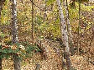 Bridge through the woods - Rays of Wisdom - Words & Prayers Of Hope & Encouragement