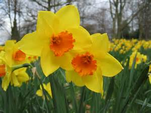 Rays Of Wisdom - Words Of Wisdom Grown On The Tree Of Life - The Daffodil Principle