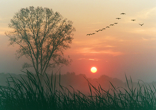 Rays Of Wisdom - Words Of Hope And Encouragement - Greetings To The Dawn