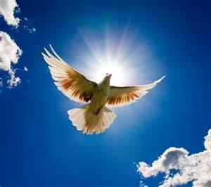 Dove of Peace - Peace Prayer - Rays of Wisdom - Relationship Healing