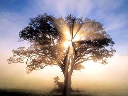 The Beauty, Wonder And Magic Of Trees - Rays of Wisdom - Words of Wisdom from the Tree of Life
