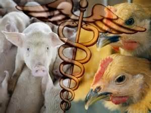 Rays of Wisdom - Our World In Transition - Bird Flu And Swine Flu - Is The Animal Kingdom Striking Back?