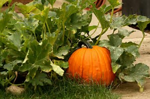 Rays Of Wisdom – Our World In Transition – Ideas That Changed Our World – Pumpkins In God's Garden