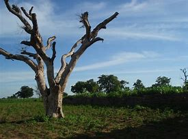Rays Of Wisdom - Our World In Transition - Christianity - A Tree With Weak Roots